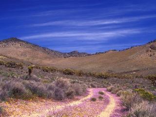 обои Мелкие цветки на склонах пустынных гор фото