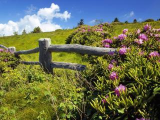 обои Цветущие кустарники и деревяный забор фото