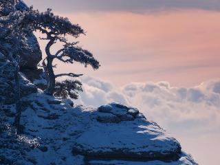 обои Кривые деревья на высокой холодной горе выше облаков фото