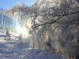 обои На исходе зимы фото