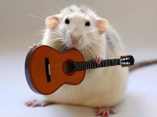 обои Ушастик с гитарой фото