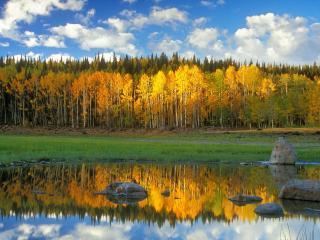 обои Озерo с камнями и осенний лес на берегу фото