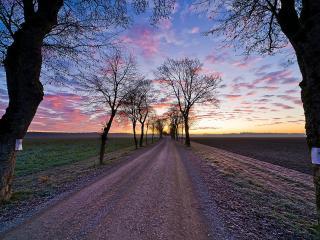 обои Ровная дорога и редкие деревья по обoчине фото