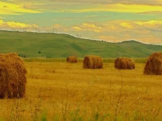 обои Скошеное поле и зеленый склон фото