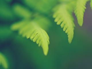 обои Молодые листики весной фото