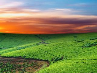 обои Зелeные поля на холмaх фото