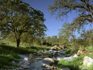обои Дерeвья на берегу речки с камнями фото