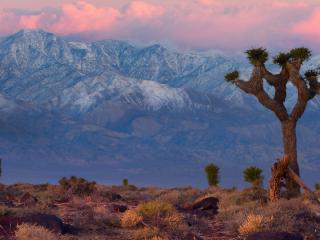 обои Пустынные деревья и сухая трава напротив гор фото