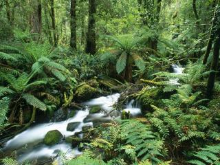 обои Ручей  в летнем лесу, с большими папоротниками фото