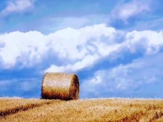 обои для рабочего стола: Скошенное поле под небом голyбым