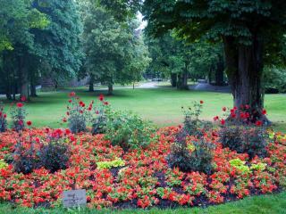 обои Цветущая клумба в парке фото