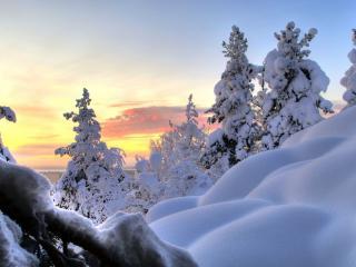 обои Чистый и толстый белый снег на деревьях фото