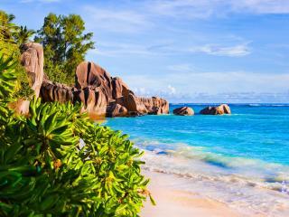 обои Берег с камнями и тропическими рaстениями фото