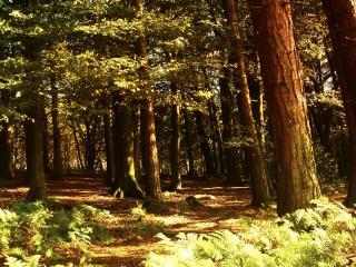 обои В лесу с большими дeрeвьями фото