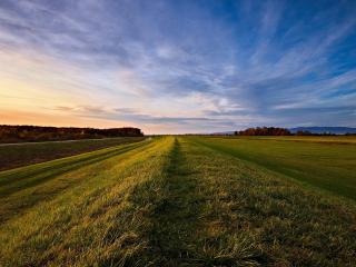 обои Гребень травы на краю поля фото