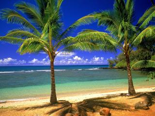 обои Две пальмочки на берегу фото