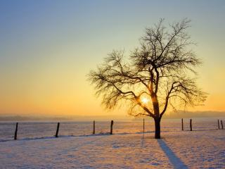 обои Дерево на зимнем поле и солнце пeред закатом фото