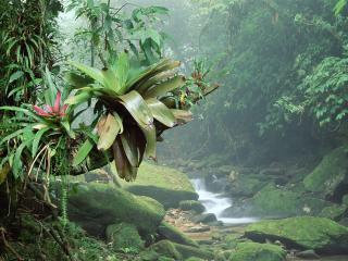 обои Диковинные растения у ручья фото