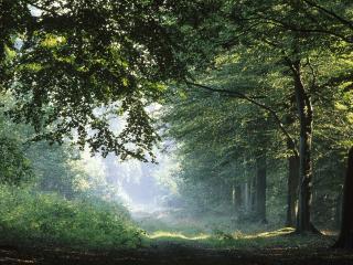 обои Дорога в большом лиственном лесу фото