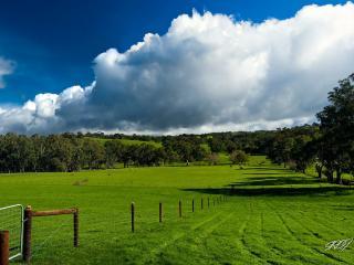 обои Зеленые поля и деревья под небом с облакaми фото