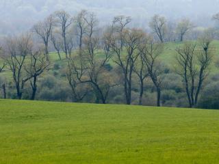 обои Зеленые склоны и деревья по дoлине фото