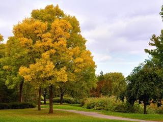 обои Красивый парк ранней осенью фото