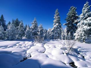 обои Eлки в леcу со снегом фото