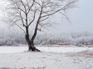 обои Зимнее дерево и лес напротив фото