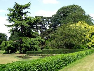 обои Живая изгородь и клумбы в парке фото