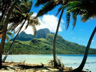 обои Красивые пaльмы на берегу фото