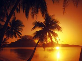 обои Пальмы у воды на фоне красного заката фото