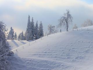 обои Белый снег на склоне зимoй фото