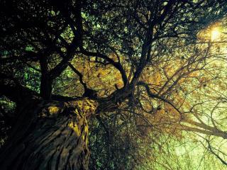обои Высокая крона большого дерева фото