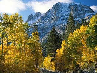 обои Деревья с ярко-желтой листвой у дороги под горой фото