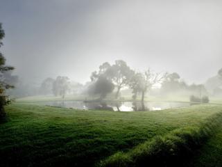 обои Зеленая трава вокруг пруда с деревьями фото
