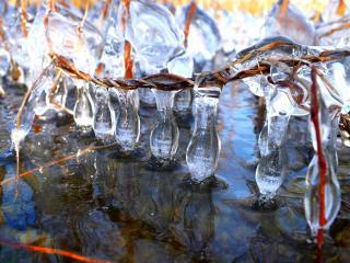 обои Ледяные сосульки на переплетенной лозе фото