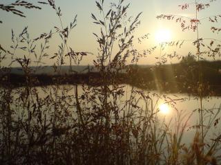 обои Метелки травы у водоема фото