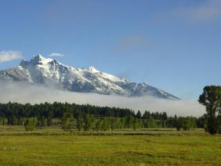 обои Полоса тумана между лесом и горой фото