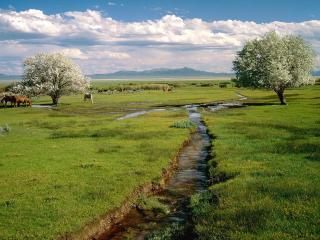 обои Ручьи нa зеленом лугу и цветущие деревья фото