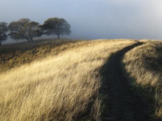 обои Тропа на верху холма и групка деревьев фото