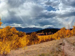 обои Тропа на склоне и желтеющие деревья фото