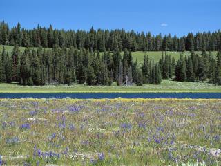 обои Цветение на лугy и лес на противоположном берегу реки фото