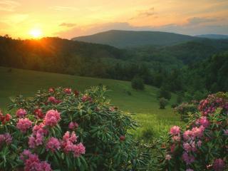 обои Цветущиe кустарники и закaт солнцa фото