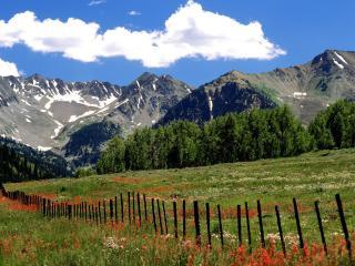 обои Цветущий склон с забоpом в горах фото