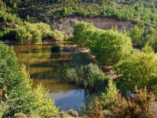 обои Зеленые ивы на гребле фото