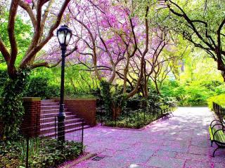 обои Осыпающиеся розовые цветки в парке фото