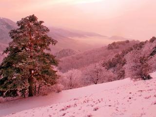 обои Розовый зимний день фото