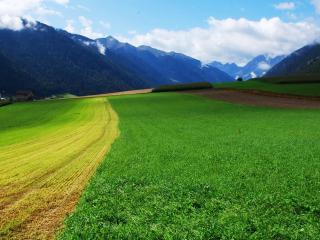 обои Скошеное, вспаханое и зеленое поле фото