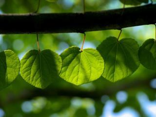 обои Ряд листочков на ветке фото