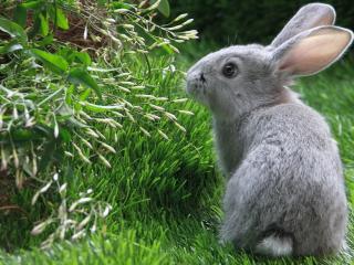 обои Серый зайчик на зеленой траве фото